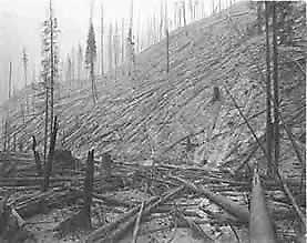 Black and white photo of burned out timber.