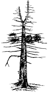Line art of a snag tree with bare branches