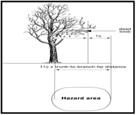 Figure 2 - graphic of a tree showing the distance of dead limb hazard area.
