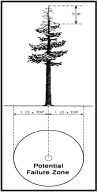 Figure 3 - graphic showing a pine tree with potential failure zone of the dead top.