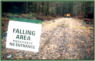Forest road with sign blocking road reading falling area positively no entrance.