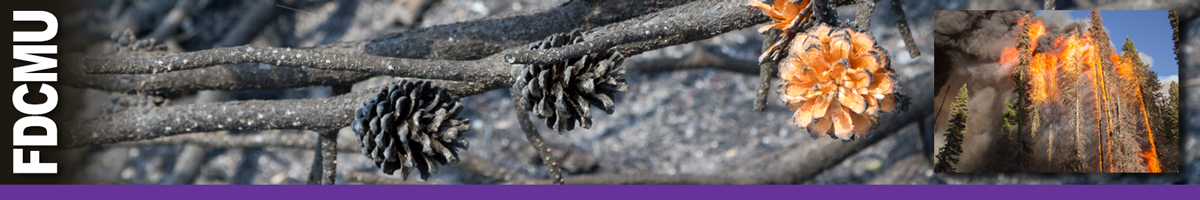 FDCMU header graphic. Burned pine cones with one not fully burned and inset photo of a stand of timber in flames. Decorative.