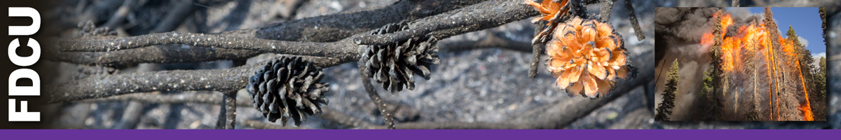 FDCU header graphic. Burned pine cones with one not fully burned and inset photo of a stand of timber in flames. Decorative.