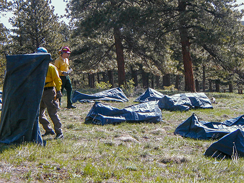 Firefighters practicing with fire shelters. Decorative.