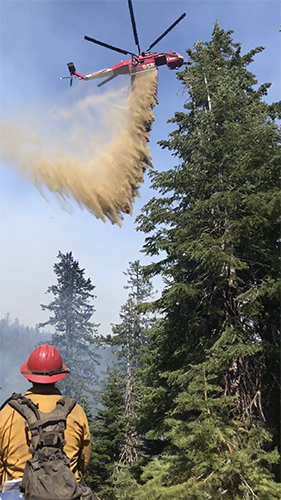Wildland firefighter watches from the ground as an air crane drops a load of water into trees. Decorative.
