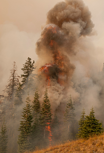 photo of a dark smoke plume coming off a stand of pine trees.