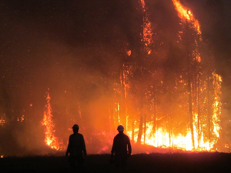 photo of fire fighters with forest burning. Decorative