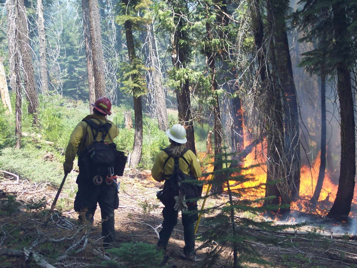 Photo of 2 firefighters looking at fire and brush