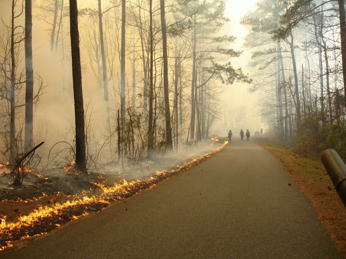 Photo of firefighters walking down a smoky road