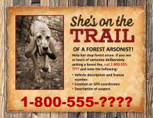 She's on the trail of a forest arsonist; photo of arson dog