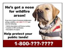 He's got a nose for wildfire arson! Photo of Riley, arson detection dog