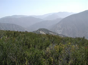 Typical Angeles National Forest front country brush and terrain looking east from Contractors Point.