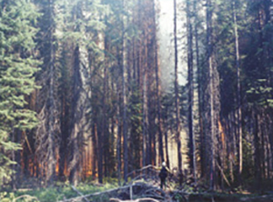 Fire behavior on east side of Chewuch River during morning hours on July 10, 2001.