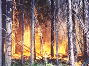 Fire behavior on east side of Chewuch River during early afternoon hours on July 10, 2001.